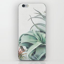 Air Plant Collection iPhone Skin