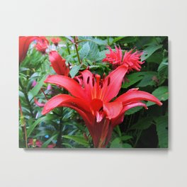 Red Lily and Bee Balm Metal Print