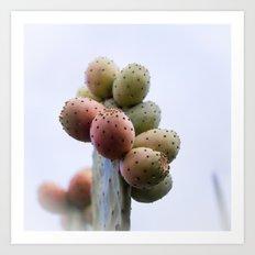 Prickly Pear Fruits Art Print