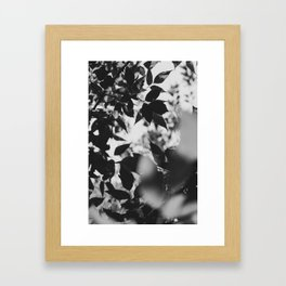 shade Framed Art Print