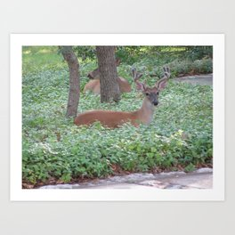 Here's Looking at You! Art Print