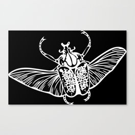 Goliath Beetle in White Canvas Print