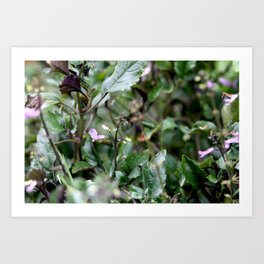 Purple Chlorophyll Art Print
