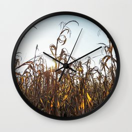 Corn field at sunset in the countryside of Lomellina Wall Clock