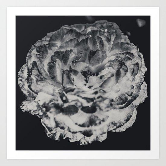 Desert Rose in Black and White Art Print