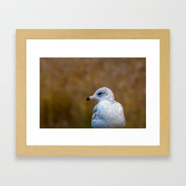 Mouette Framed Art Print