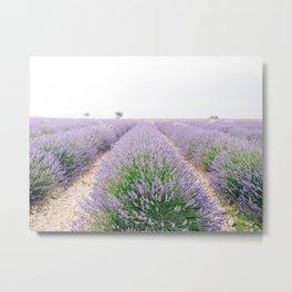 Lavender Field in Provence, Frane Metal Print