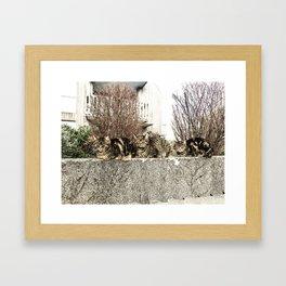 Neighborhood watch Framed Art Print