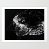 border collie Art Prints featuring Border Collie by Taylored Petraits