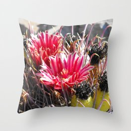 Barrel Cactus in Late Bloom, Red Flowers, Yellow Fruit Throw Pillow