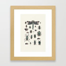 Collection of Insects Framed Art Print