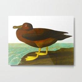 Dusky Albatros Metal Print