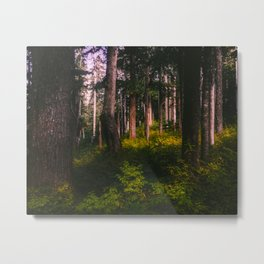 Oregon Forest II Metal Print