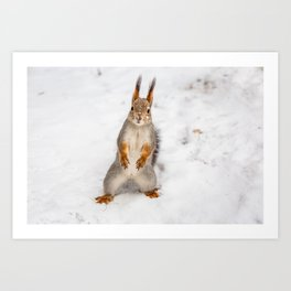 Do you have any boots for squirrels? Art Print