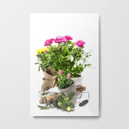 Beautiful pink and yellow roses in a flowerpots and garden tools  isolated on white Metal Print