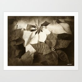 Mixed Color Poinsettias 2 Antiqued Art Print