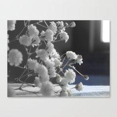 little white flowers Canvas Print