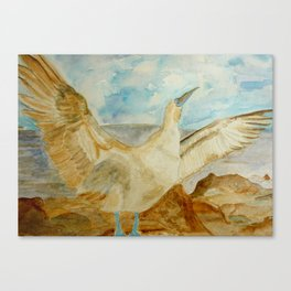 Galapagos Blue-Footed Booby Seabird Canvas Print