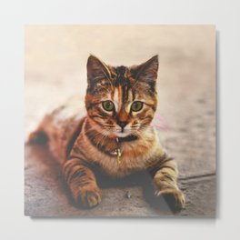 Cute Young Tabby Cat Kitten Kitty Pet Metal Print