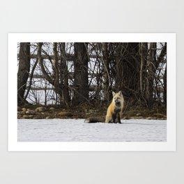 Beautiful Red Fox - No. 4 Art Print