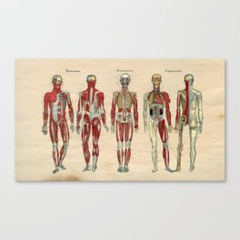 Human Muscle Nerve Artery Anatomy 1841 Print Canvas Print