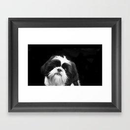 Shih Tzu Dog Framed Art Print