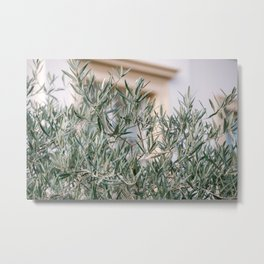 Olive trees in the middle of the city | Netherlands | Hoorn Metal Print
