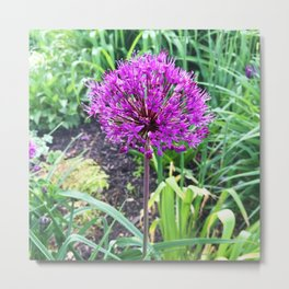 466 Allium FLower Metal Print