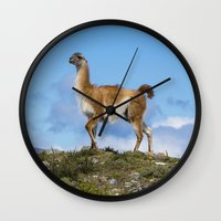 chile Wall Clocks featuring A Guanoco, in Patagonia, Chile. by davehare