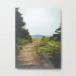 forest trail (ii) Metal Print