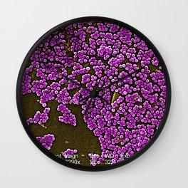 Clumps of Methicillin-Resistant Staphylococcus Aureus Bacteria Wall Clock