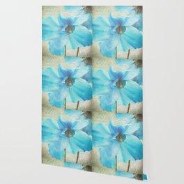Blue Himalayan Poppies Wallpaper