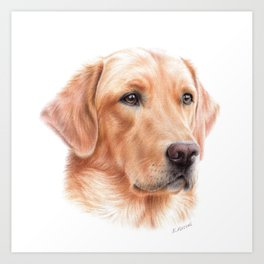 Labrador colored pencil drawing Art Print