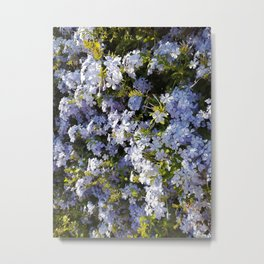 a violet flower in the heart of Athens Metal Print
