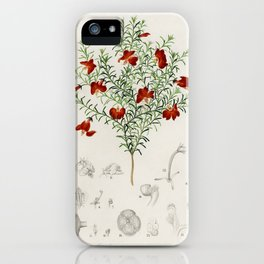 Red leschenaultia (Lechenaultia formosa) illustrated by Charles Dessalines D' Orbigny (1806-1876). iPhone Case
