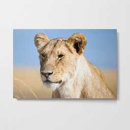 Lioness against blue sky Metal Print