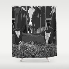 Black & White Cattle Feeding Pencil Drawing Photo Shower Curtain