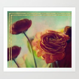 Painted Ranunculus Art Print