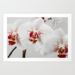 Black and White Orchid With Red Highlights Art Print