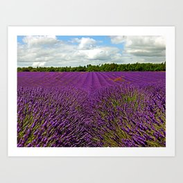 Lavender Landscape (Version 1)  Art Print