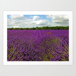 Lavender Landscape (Version 1)  Art Print