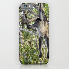 Spider Monkey Acrobatics in Belize Jungle iPhone Case