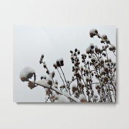Snow on Sleeping Rose of Sharon Metal Print