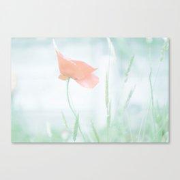 Lone poppy Canvas Print