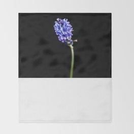 Lavandula pinnata Throw Blanket