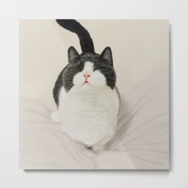 Cute Munchkin _ Realistic cat drawing Metal Print