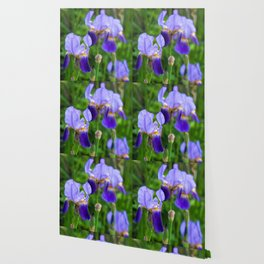 Iris Parade Wallpaper