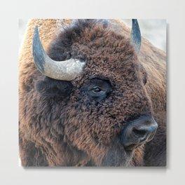 OLena Art Bison the Mighty Beast - Bison das mächtige Tier North American Wildlife Metal Print