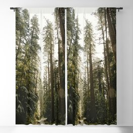 Redwood Forest Adventure III - Nature Photography Blackout Curtain