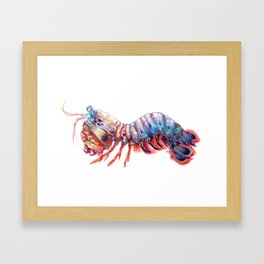 Mantis Shrimp Framed Art Print